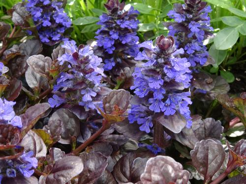 Perennials From Growing Colors