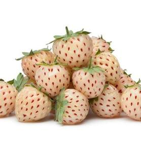 Strawberry x 'Pineberry'