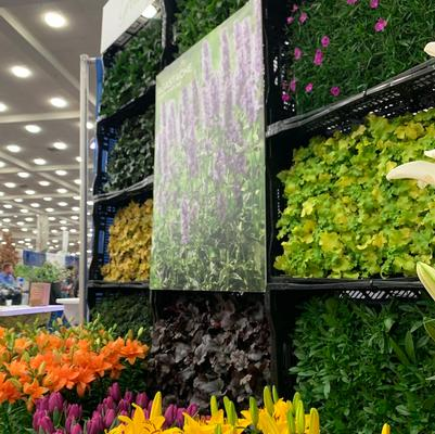 Growing Colors™ at Cultivate 2017