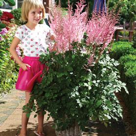 Astilbe chinensis Mighty™ Pip