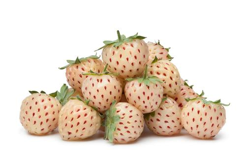 Strawberry x Pineberry