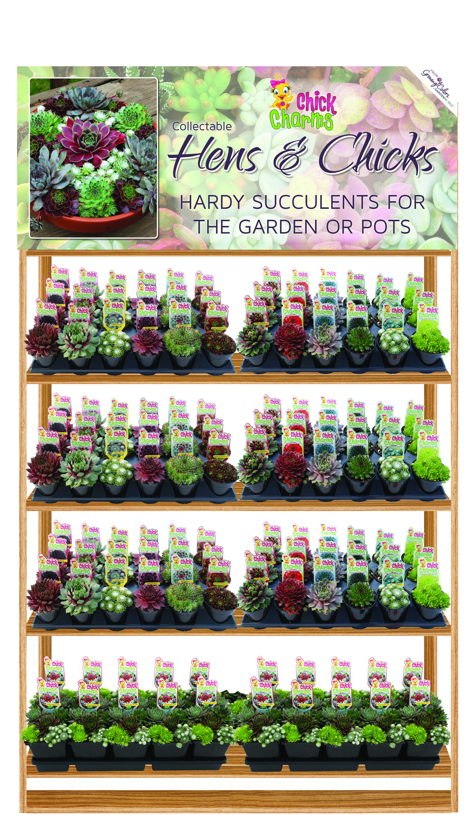 Sempervivum Chick Charms® Display Rack with Header